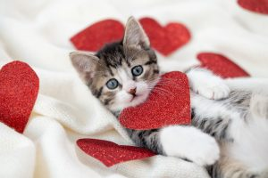 Kitten poses with red heart cutouts representing self-love and self compassion to deal with autism and loneliness. Get autism therapy in California with an autism therapist at Open Doors Therapy
